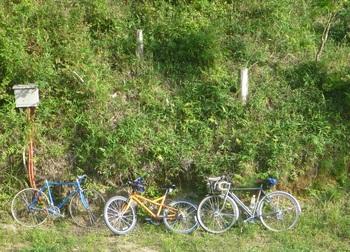 277自転車たち.JPG